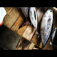 3-mile-tuna